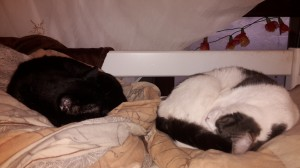 2 Kater schlafen