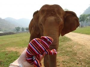 Elefant ortet Geräusche