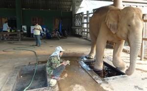 Elefant medizinisches Fußbad